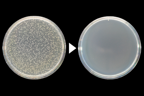 大腸菌殺菌効力試験